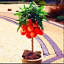 thumbnail 11 - Sweet-Peach-Autumn-Plants-Red-Tree-Fruit-Home-Garden-Pots-Flowers-10-PCS-Seeds-V