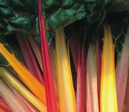 Beet Leaf 50g Seeds Rainbow Chard Mixed Bulk Vegetable