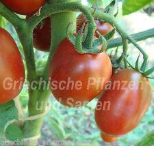 AMISH PASTE Tomate 10 Semillas histórico Botellas Tomate de Pasta Regalo