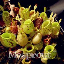 50PCS Apple Nepente a mangiare semi sementi di zanzara Piante Decorazione del Giardino Fiore