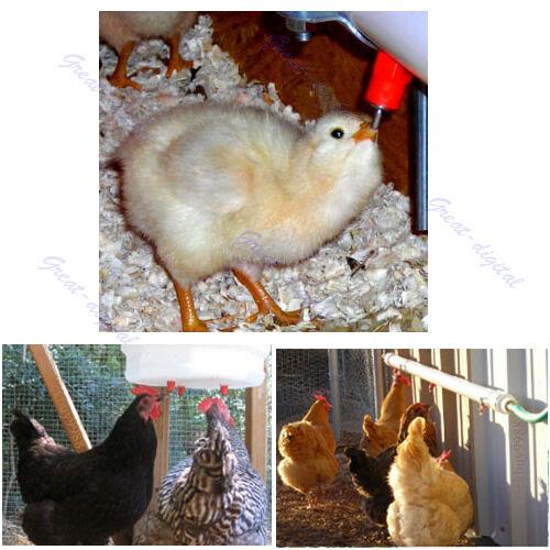 5 pcs Chicken Duck Hen Screw Automatic In Poultry Water Nipple Drinker Feeder