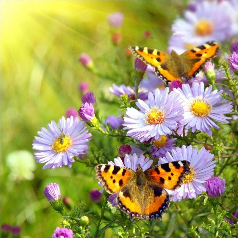 Wandaufkleber Deko  -feld Blaumen Schmetterlinge 1245