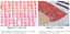 thumbnail 11 - Dragonfly-Cross-Stitch-Diamond-Painting-Kit-Embroidery-Rhinestone-Home-Decor-Art