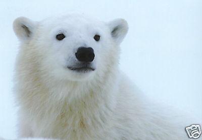 Originalkarte! The little Polar Bear Ansichtskarte: Knut der kleine Eisbär