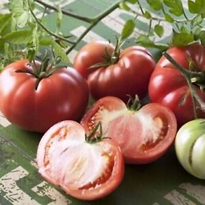 Tomato 5 Seeds Organic Vegetable Marmande Economy