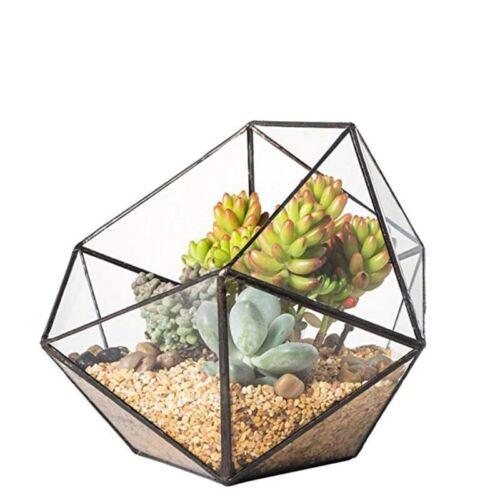 Glass Terrarium Geometric Prism Tabletop Box Flower Pot Plant Flower Vase Moss