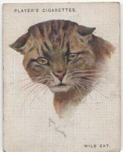 Wildcat-Africa-India-Feline-80-Y-O-Trade-Advertising-Card