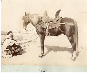 Algerie-spahis-Vintage-albumen-print-Tirage-albumine-15x20-Circa-1880