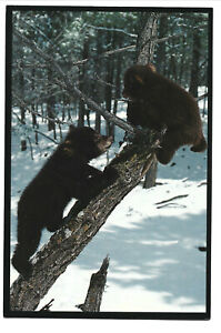 VIEW OF A PAIR OF BLACK BEAR CUBS.