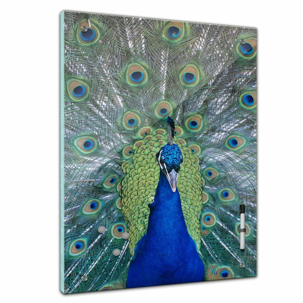 MEMO Board-ANIMALI-coda di pavone Portrait