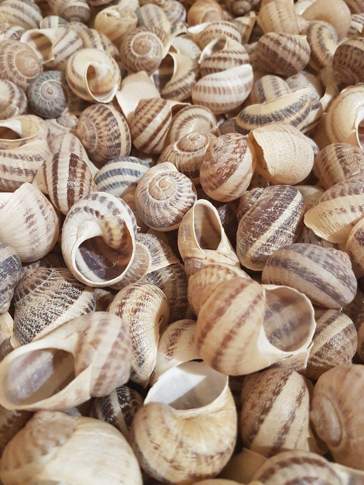 CON GLIE 500 grandi ESCARGOTLUMACHE Con glie per shelldwelling CiclidiSERBATOIO Decor