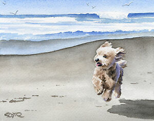 Image Is Loading Apricot Poodle Art Print Beach Watercolor 11 X