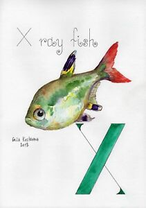 X-Ray-Fish-ABC-series-original-Gala-Kostroma-watercolor-alphabet-painting-art