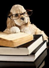 American Cocker Spaniel Reading Book Funny Animal Art Poster 12' x 17'