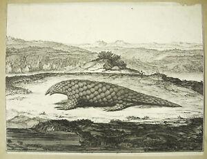 Pangolin-Pengguling-Manides-Manidae-Engraving-18th-Animal-Antique-Print