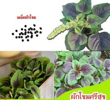 Amaranthus Blitum 500 Seeds Greek Amaranth Guernsey Pigweed Vegetable Annual
