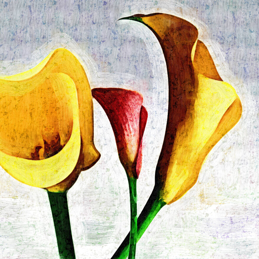 3D Farbe Calla Lily 694 Wall Paper Wall Print Decal Wall Deco Wall Indoor Murals