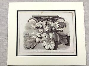1859-Print-Architectural-Acanthus-Leaf-Corinthian-Column-Antique-Original