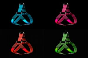 Light-Up-LED-Dog-Harness-Safety-in-Blue-or-Pink-Colours-Small-Medium-Large-Sizes