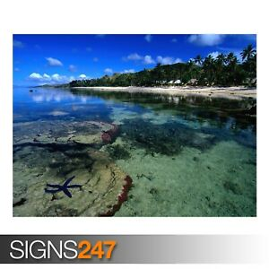 STARFISH-ALONG-THE-CORAL-3316-Beach-Poster-Poster-Print-Art-A0-A1-A2-A3-A4
