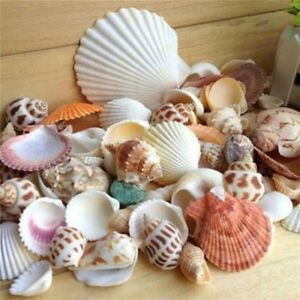 100G-Beach-Mixed-Seashells-Mix-Sea-Shells-Shell-Craft-Seashells-Aquarium-Dec-PA