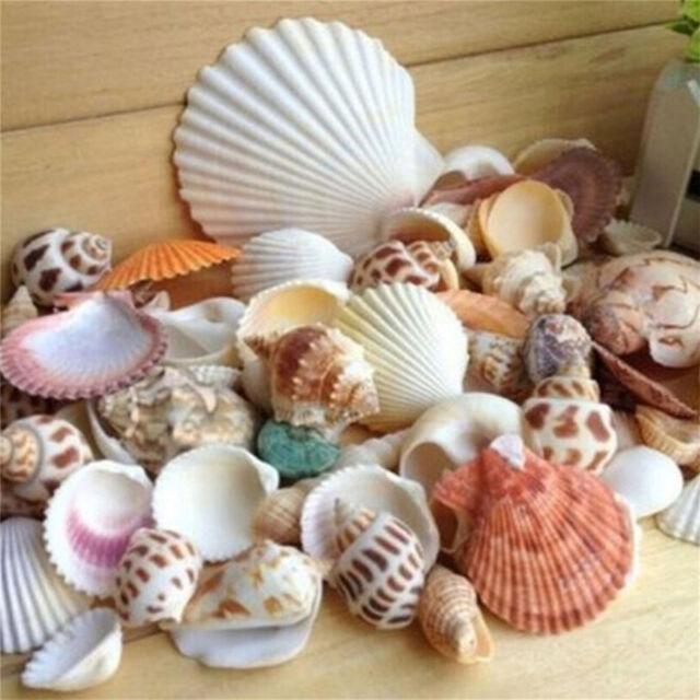 100g beach mixed seashells mix sea shells shell craft seashells
