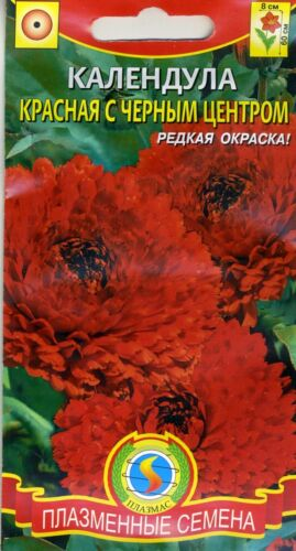 """Calendula /""""Red with black center/"""" Russian High Quality"""