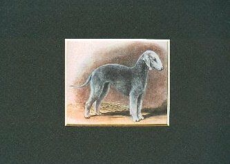 Megargee CLEARANCE Airedale Terrier Dog Art Print