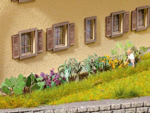 NOC14054-17 plantes de légumier