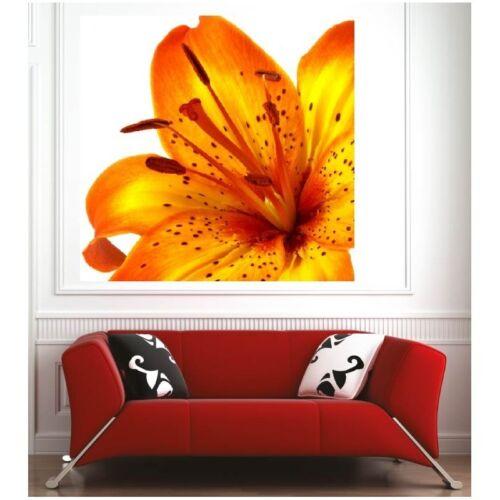 Affiche poster fleur  14453977