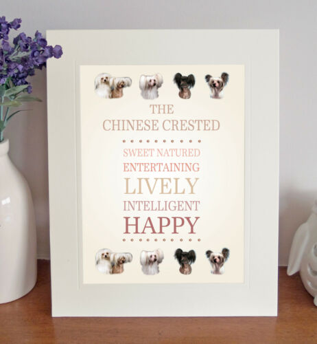 Chinese Crested 8 x 10 Free Standing BREED TRAITS Picture 10x8 Dog Print Gift