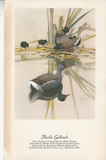 CI26.Vintage Postcard. Birds.Florida Gallinule. By Francis Lee Jaques.