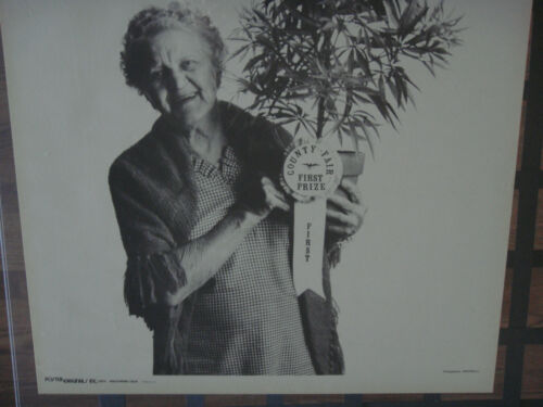 Vintage Poster Originals Granny First Prize County Fair Pot Plant Old Lady Weed