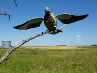 Lucky Duck Dove-n-air Motorized Flapping Motion Rapid Flyer Dove Decoy