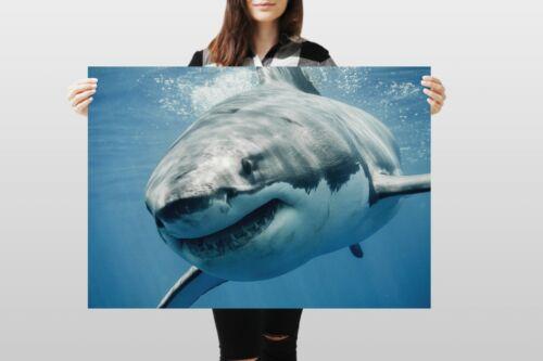 A1Great White Shark Poster Art Print 60 x 90cm 180gsm Ocean Sea Gift #8474