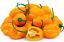 Organic-Garden-Vegetable-Seeds-NON-GMO-Heirloom-Seed-79-Varieties-NON-Hybrid thumbnail 55