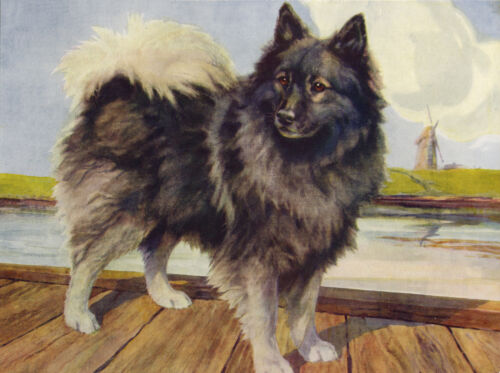 KEESHOND LOVELY DOG GREETINGS NOTE CARD