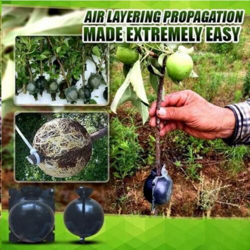 Plant High Pressure Box Graft Grafting Rooting Growing Device Propagation Ball