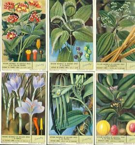 LIEBIG : S_1577 - Histoire naturelles de quelques épices