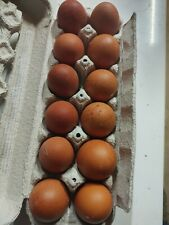 12 French Black Copper Marans Hatching Eggs