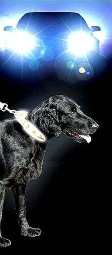 SICHERHEIT HUNDEHALSBAND Flash&Reflex Halsband gelb 25mm/30-37cm BIS 300m SICHT