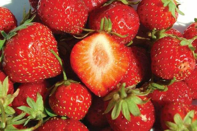 Berry Good Flavour