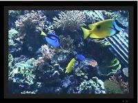 Digital Picture Frame Aquarium Videos