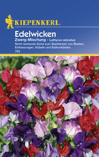 Wicken Duftwicken Mischung Zwerg MHD 01//21 Kiepenkerl 793