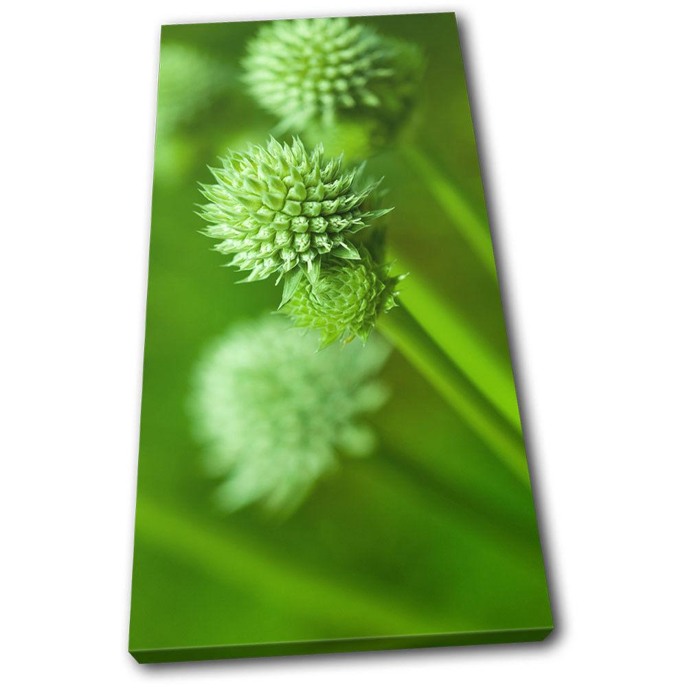 Plant vert vert Floral SINGLE TOILE murale ART Photo Print