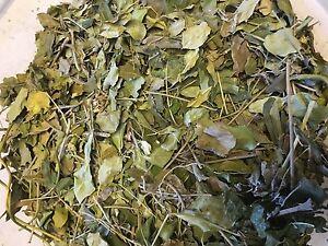 Moringa-Blaetter-Naehrstoffe-pur-Futter-fuer-Garnelen-Krabben-und-Krebse-amp-Co