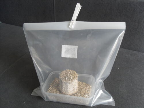 Magic farm/'s oyster mushroom growing kit replacements