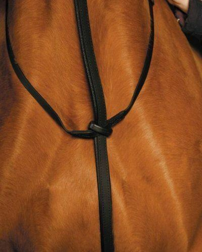 Wintec Padded Standing Martingale with Stainless Steel Buckles Brown Full or B