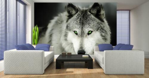 Tapete Fototapeten Tapeten Poster Trier Wolf Tieren Natur Hund GRÜN 14N2937P8