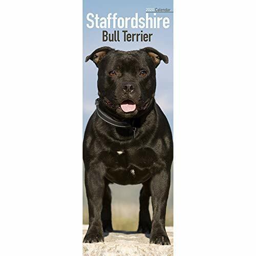 Staffordshire Bull Terrier Slim Calendar 2020